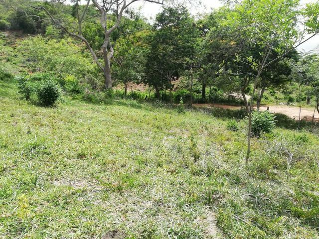 Oportunidade Fazenda de 175 hec por 430 mil - Foto 9