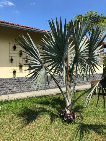 Granja em condominio fechado - Simão Pereira - Foto 11