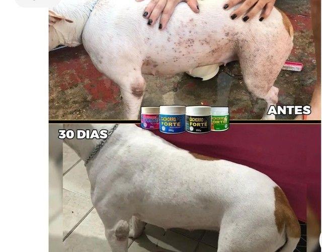 Vitaminas para cães  - Foto 5