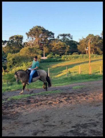 Cavalo Crioulo - Cavalo baio cabus negro  - Foto 3