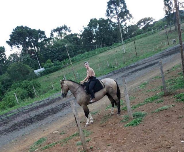 Cavalo Crioulo - Cavalo baio cabus negro  - Foto 2