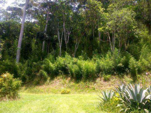 Vale das Videiras - Vende-se terreno 2.400 m2 (direto com propretário) - Foto 2