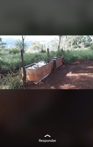 Fazenda próximo Araguari 72 Alqueires - Foto 4