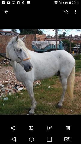Cavalo arrumado andador