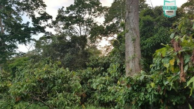 Barro Preto-BA. Fazenda de 167 Hectares. produção de cacau - Foto 13