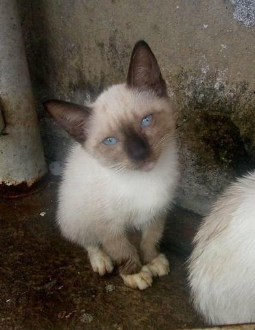 Filhotes de gato gata (doação)