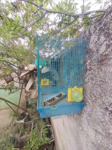 Gaiola dê hamster boa meu zap * - Foto 3