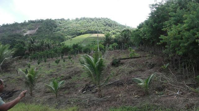 Sítio dos sonhos seu pedaço do Paraíso com 7 hectares por 150 mil - Foto 11