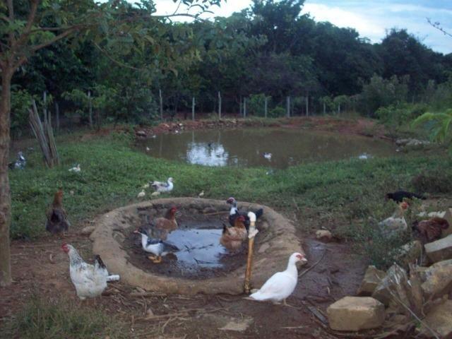 Cód. 5284 - Sítio em Cocalzinho de Goiás - Foto 8