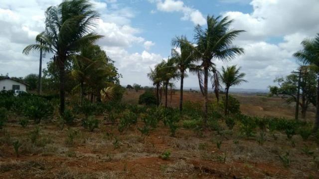 Sítio para venda em lagoa do itaenga, lagoa de itaenga - Foto 11