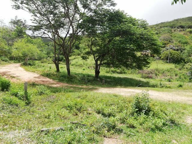 Oportunidade Fazenda de 175 hec por 430 mil - Foto 7