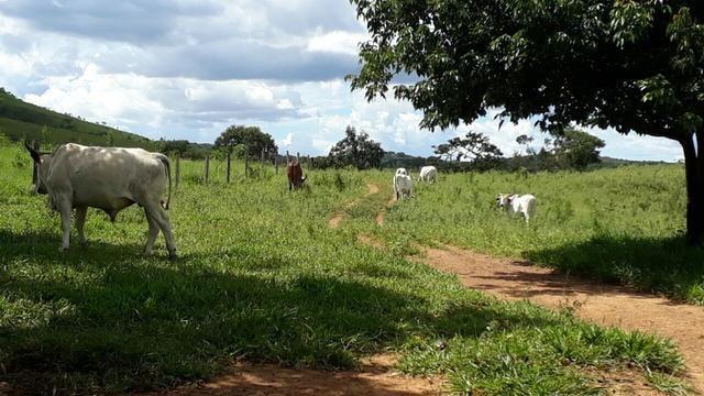 Fazenda Linda - Foto 7