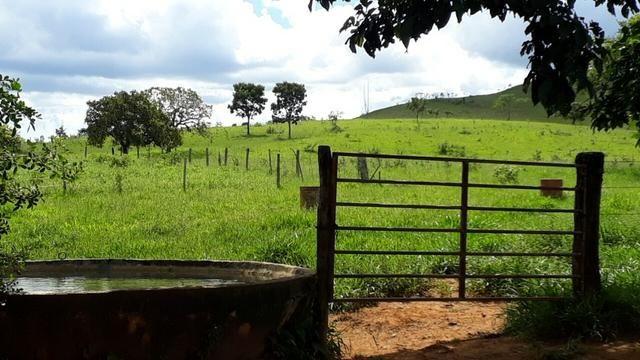 Fazenda Linda - Foto 4