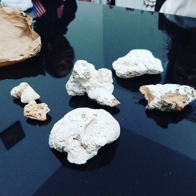 Pedras com concha dentro do fundo do mar pode ter alguma presta preciosa