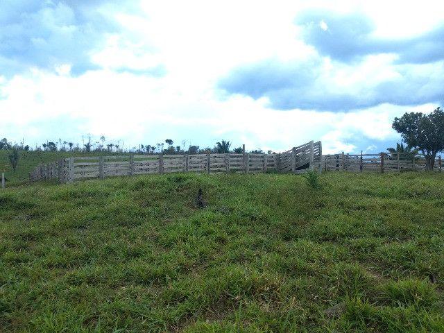 Fazenda (Porteira fechada) no Apuí-AM - Foto 10