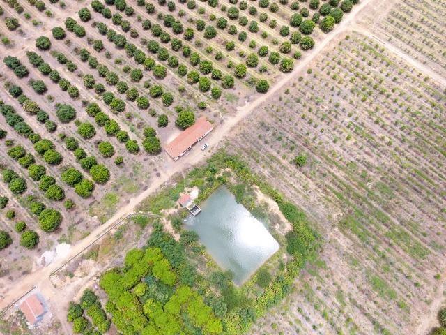 Fazenda 43 Hectares - Venda - Foto 8