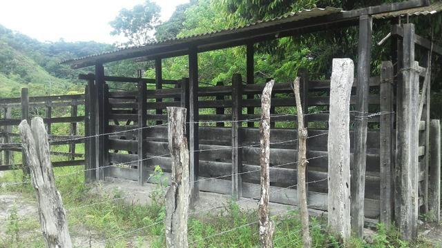 Linda Fazenda em Joaquim Gomes 60 hectares apenas 750 mil - Foto 8
