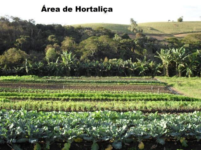Fazenda com tudo (Casas, lagos, heliporto etc) - Foto 3