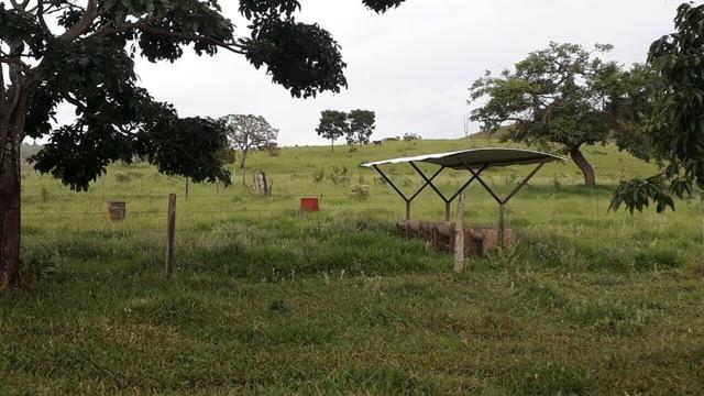 Fazenda Linda - Foto 8