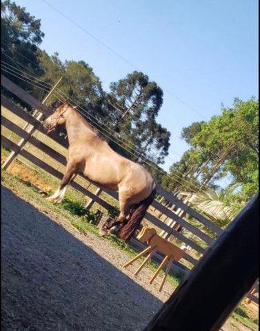 Cavalo Crioulo - Cavalo baio cabus negro  - Foto 4