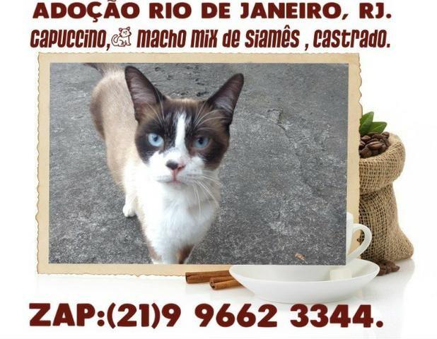 Maravilhosos gatinhos, para adoção Zona Sul, RJ