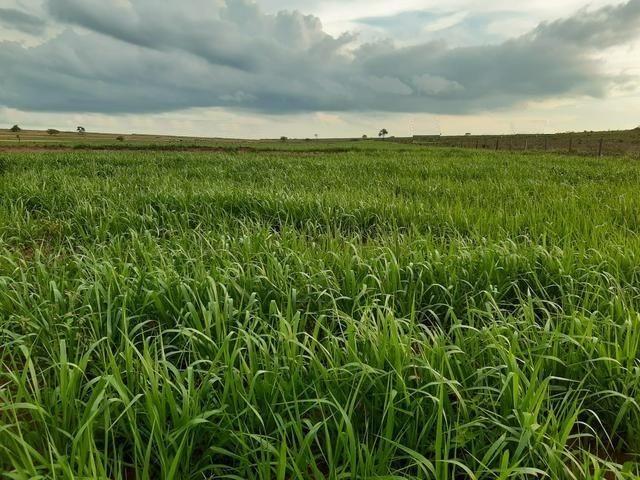 Fazenda com 515 hectares em Bataguassu toda formada em pastagem