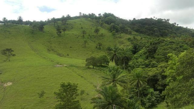 Linda Fazenda em Joaquim Gomes 60 hectares apenas 750 mil - Foto 14