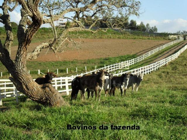 Fazenda com tudo (Casas, lagos, heliporto etc) - Foto 8