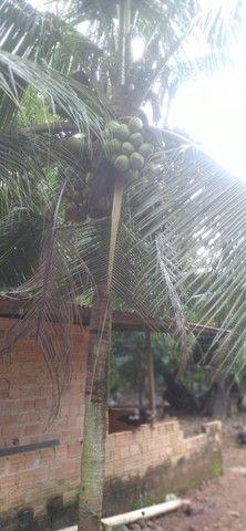 Coco Verde e amarelo  - Foto 2