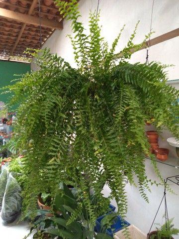 Plantas - Foto 6