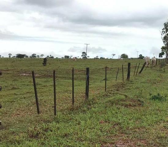 Oportunidade de Fazenda com 128 alqueires em Bataguassu Ms de frente p asfalto - Foto 5
