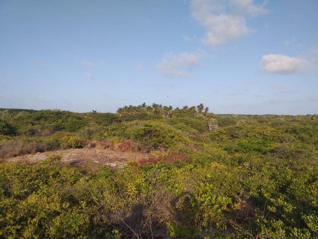 Sítio Atins 13 hectares na frente do rio - Foto 5