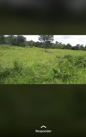 Fazenda próximo Araguari 72 Alqueires - Foto 3