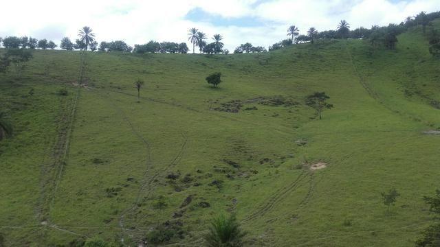Linda Fazenda em Joaquim Gomes 60 hectares apenas 750 mil - Foto 7