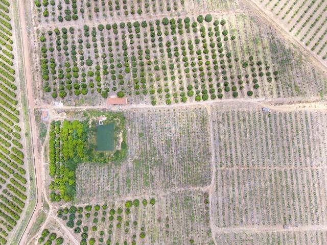 Fazenda 43 Hectares - Venda - Foto 3
