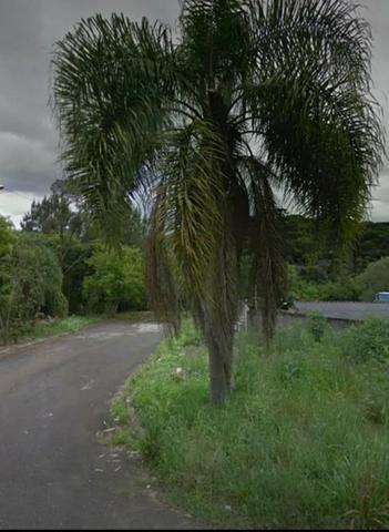 Proximo a rodovia da uva colombo, libera para construção de casas e apartamentos - Foto 6