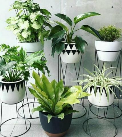 Vários modelos de plantas