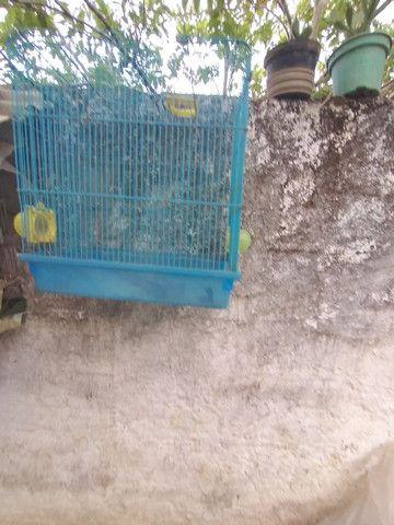 Gaiola dê hamster boa meu zap * - Foto 2