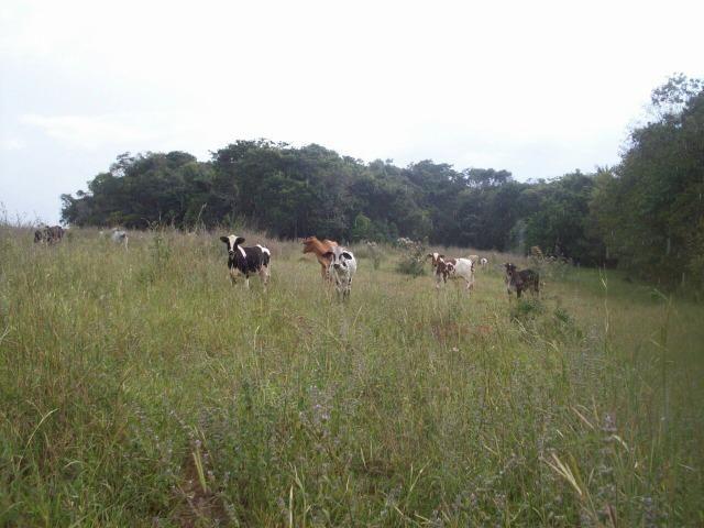 Cód. 5284 - Sítio em Cocalzinho de Goiás - Foto 15