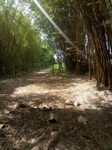 Fazenda para venda em paudalho, guadalajara - Foto 15
