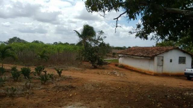 Sítio para venda em lagoa do itaenga, lagoa de itaenga - Foto 7