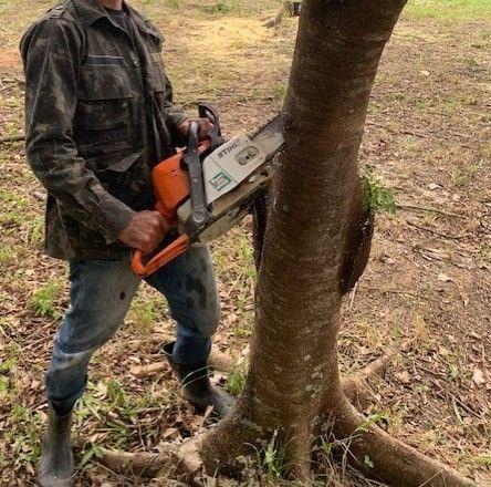 Poda e cortes de árvores, coqueiros com motoserra