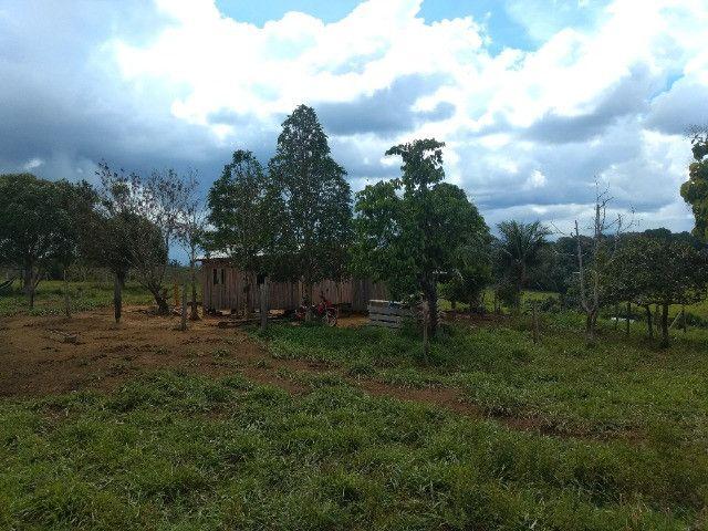 Fazenda (Porteira fechada) no Apuí-AM - Foto 4