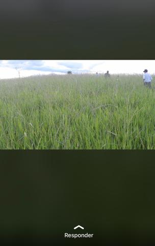 Fazenda próximo Araguari 72 Alqueires - Foto 5
