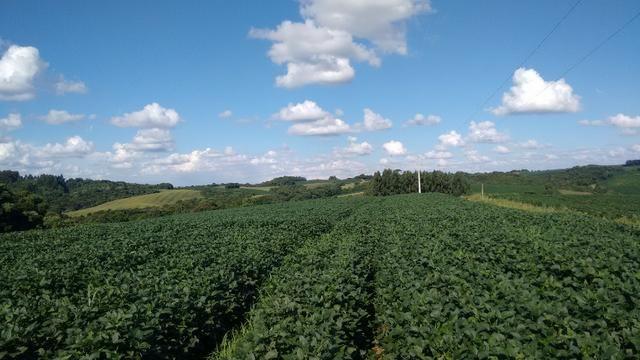 Fazenda vendo Santa Maria do Oeste - PR - Foto 4