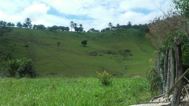 Linda Fazenda em Joaquim Gomes 60 hectares apenas 750 mil - Foto 13