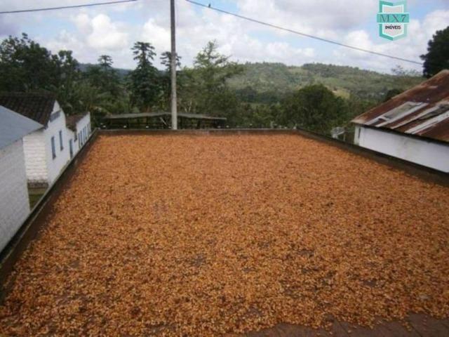 Fazenda de 278 hectares, entre Ubaitaba e Travessão - Foto 3