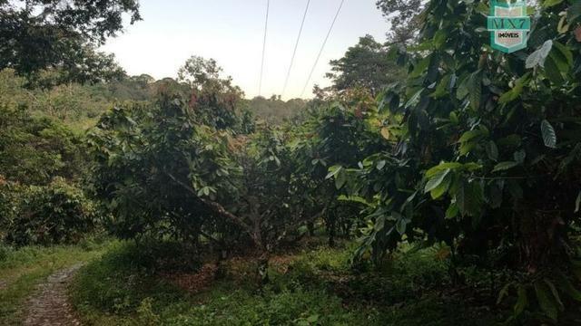 Barro Preto-BA. Fazenda de 167 Hectares. produção de cacau - Foto 18