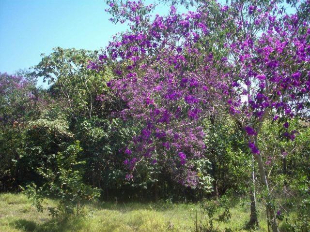 Cód. 5284 - Sítio em Cocalzinho de Goiás - Foto 20