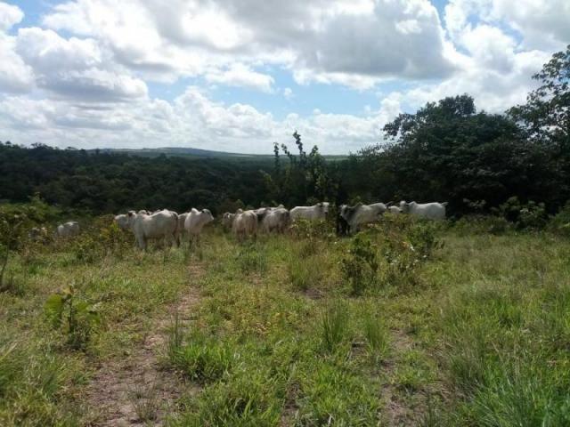 Fazenda para venda em paudalho, guadalajara - Foto 8